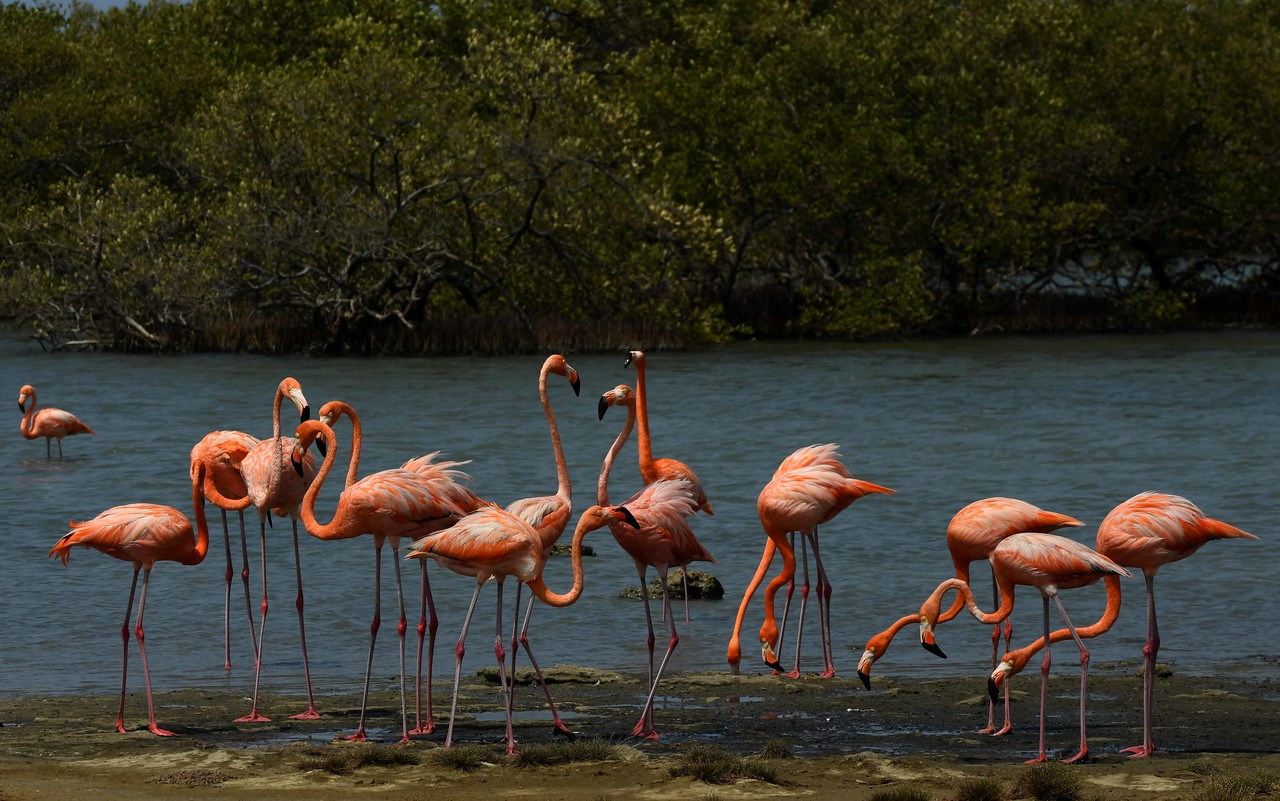 """toward the flamingos in the sun.' ~ """"Boy in the Roman Zoo"""" by Archibald MacLeish, 1968."""