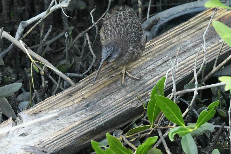 on shrinking prairies & tumbleweed mesas