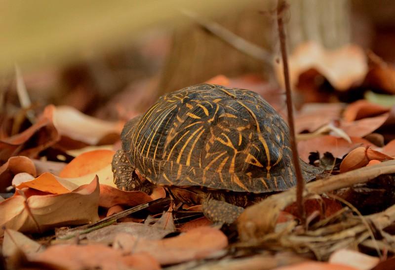 "The tortoise sinks into the sky's blue depths.' ~ ""Tortoise"" by Sakutaro Hagiwara"