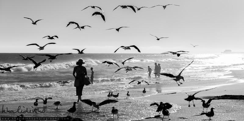 Birds Lady