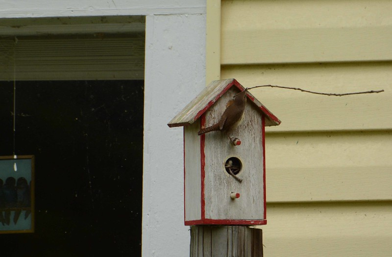 He builds the nest and sings on territory until she appears for approval. Poem by Anne Sexton: