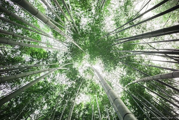 Bamboo Forest Arashiyama, Kyoto,2015