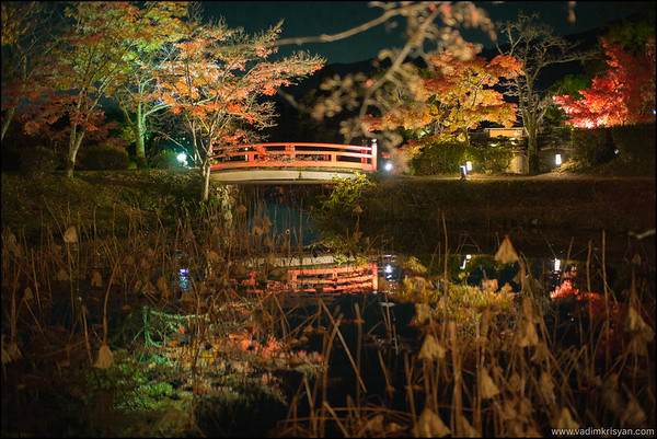 Daikaku-Ji Temple, Foliage Night Illumination, Kytoto,2015