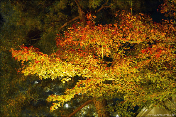 Chion In Temple, Fall Foliage, Kyoto, 2015
