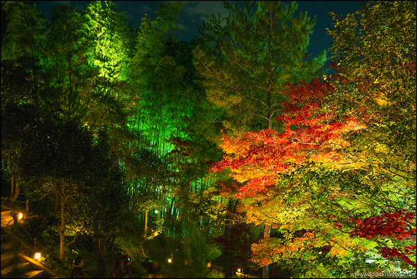Kodai-Ji  Temple, Foliage Night Illumination, Kytoto,2015
