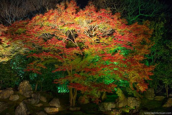 Entoku-In Temple, Foliage Night Illumination, Kytoto,2015