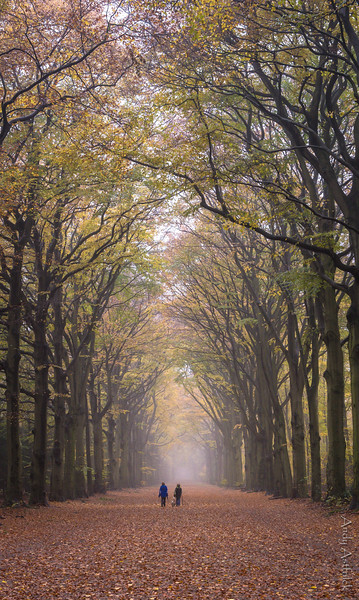 M&P Hilversum Forest
