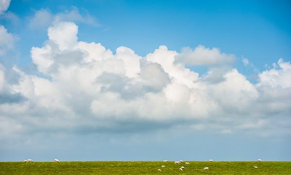 Sheep meet Sky