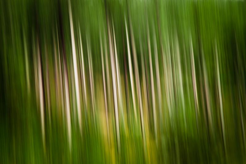 Trees spirit