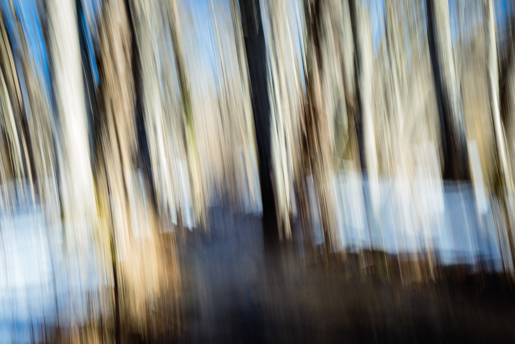 Ruisseau et forêt en hiver