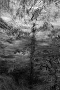 Panning from the Passenger Window No. 1 (B&W)