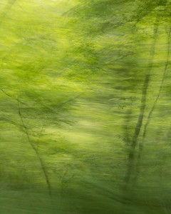 Panning from the Passenger Window No. 11