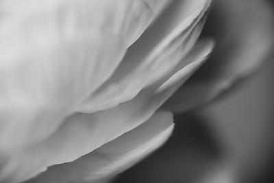Petals essence - image 3