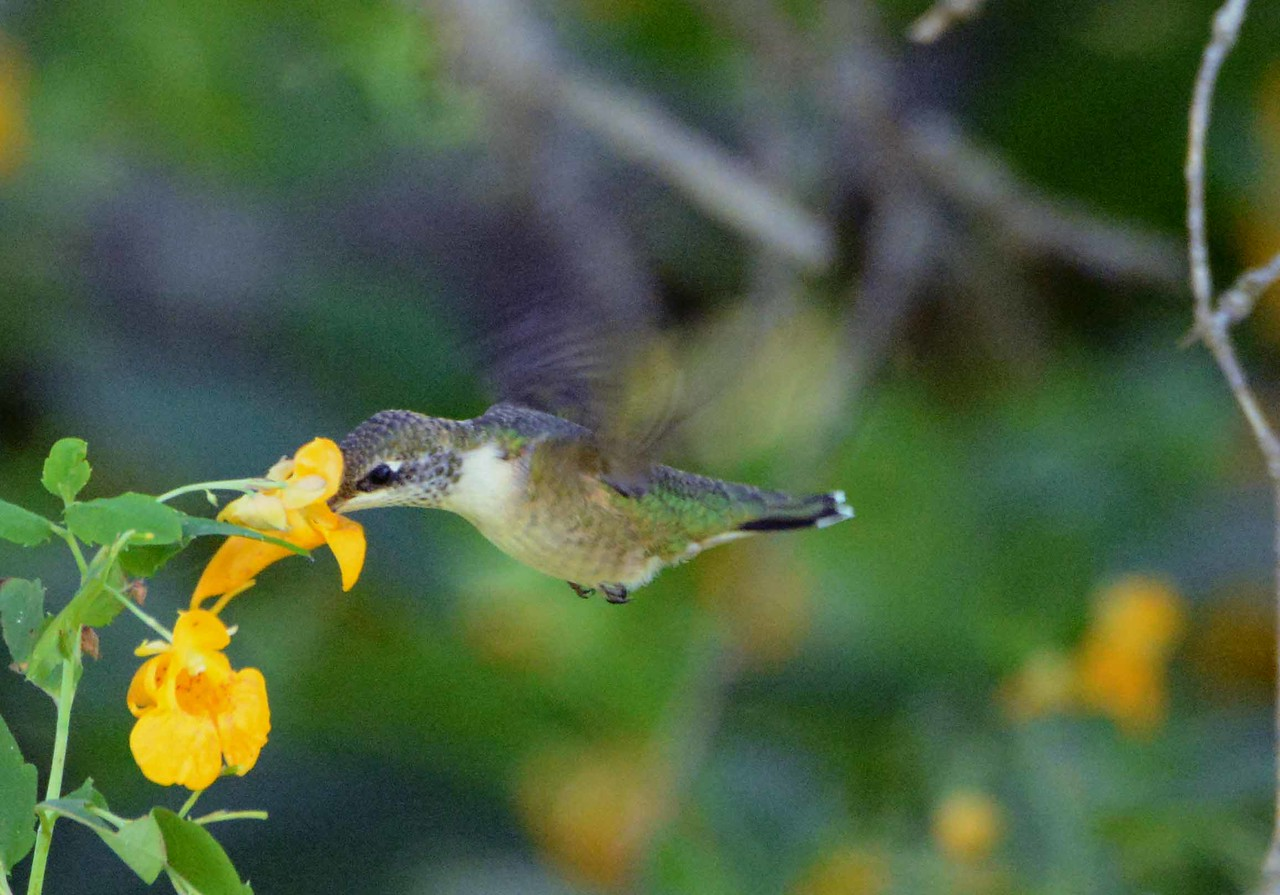 and saw the hummingbird and she stood still<br /> the same way with the same spell holding her