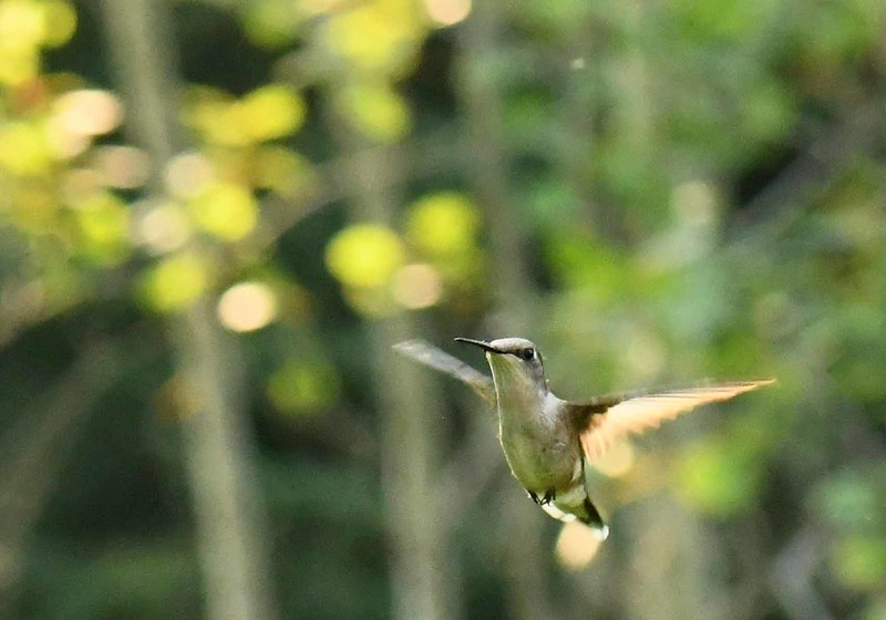 came there the humming bird flew to her<br /> and tapped her on the forehead with his beak