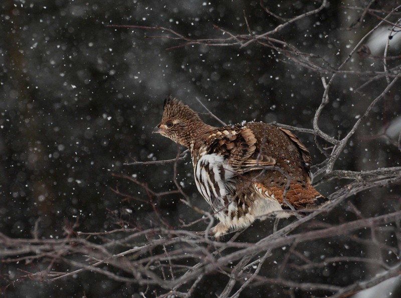 Dead by the fox or dead by winter snows,<br /> What difference perhaps—god only knows.