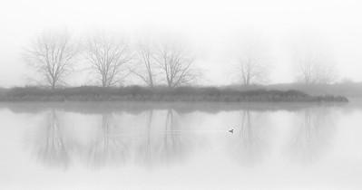 Misty Morning Swim