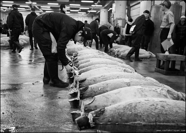 Display & Fish Inspection at Tsukiji Tuna Market Auction, Tokyo,2014
