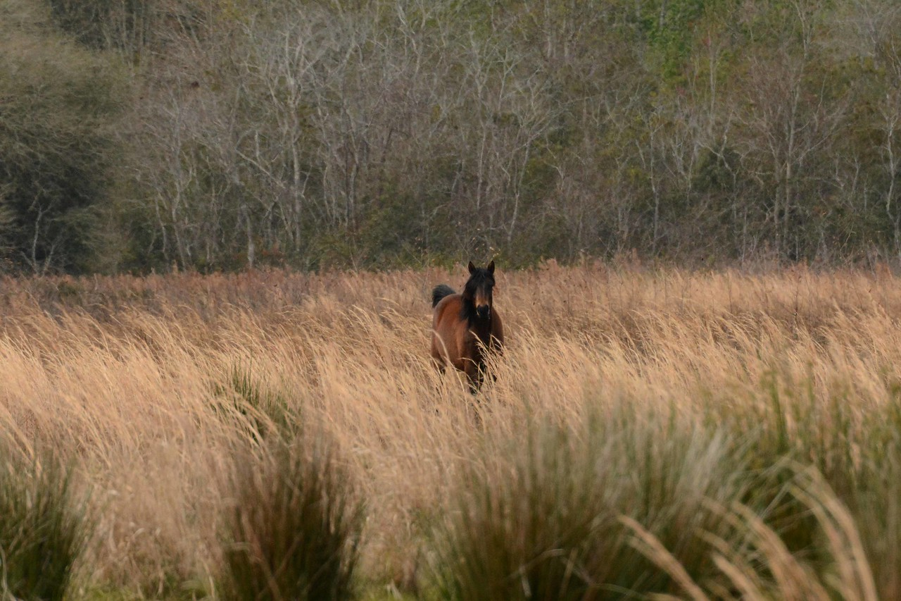 ...but this mare also studied us a good while from a distance.