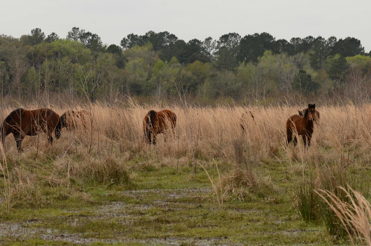 King Payne led Seminole battles against both the Spanish and early Americans. This park includes some of the original Alachua Savannah he fought to defend.
