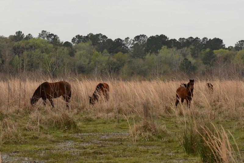 Florida's first preserve (est. 1971) is also a National Landmark (est. 1974).