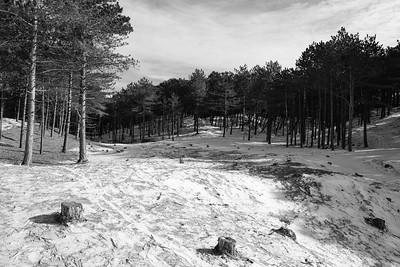 Duin- en bosgebied achter West-Terschelling #5