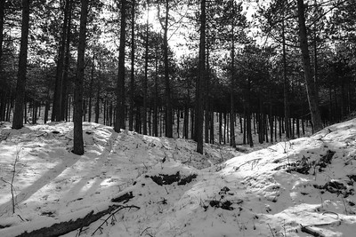 Duin- en bosgebied achter West-Terschelling #6