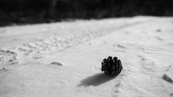 Dennenappel in sneeuw