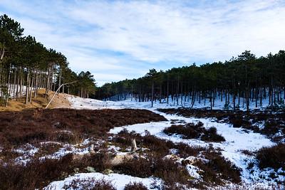 Duin- en bosgebied achter West-Terschelling #1