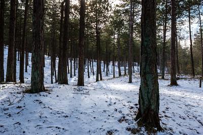 Duin- en bosgebied achter West-Terschelling #8