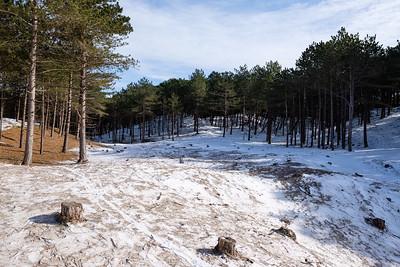 Duin- en bosgebied achter West-Terschelling #4