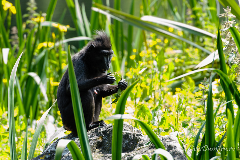 Dublin ZOO: macaques