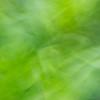 Ecinacea Foliage