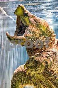 DSC_9086 Godzilla  best wm