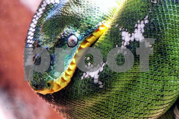 Serpentarium,  Wilmington, NC  2016