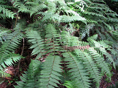 Upper sides of pohole fronds.