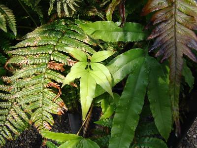 2012-06 Rare Plant Facility