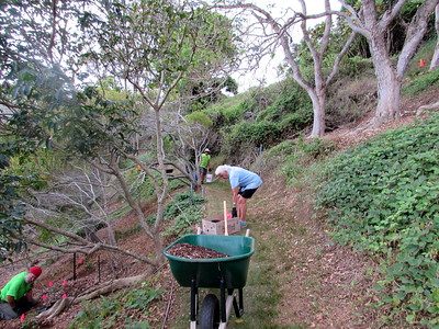 We also fertilized and mulched the newly planted trees. (Photo by Irene Newhouse)