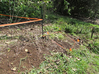 The orange tape marks new plantings of endangered Kamanomano (Cenchrus agrimonioides). Around the pipe with faucet is an earlier planting from which members weeded honohono and kupukupu.
