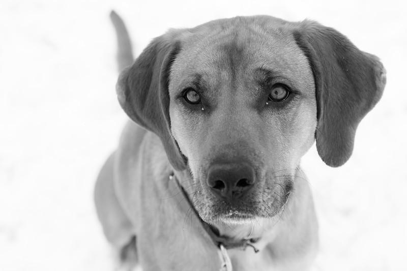 """Anna.  Lab - Hound. Adopt Pet Shelter  <a href=""""http://www.adoptpetshelter.com"""">http://www.adoptpetshelter.com</a>"""