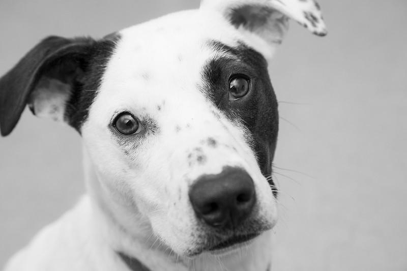 "Dolly.  Hound - Terrier mix.  A.D.O.P.T. Pet Shelter  <a href=""http://www.adoptpetshelter.com"">http://www.adoptpetshelter.com</a>"