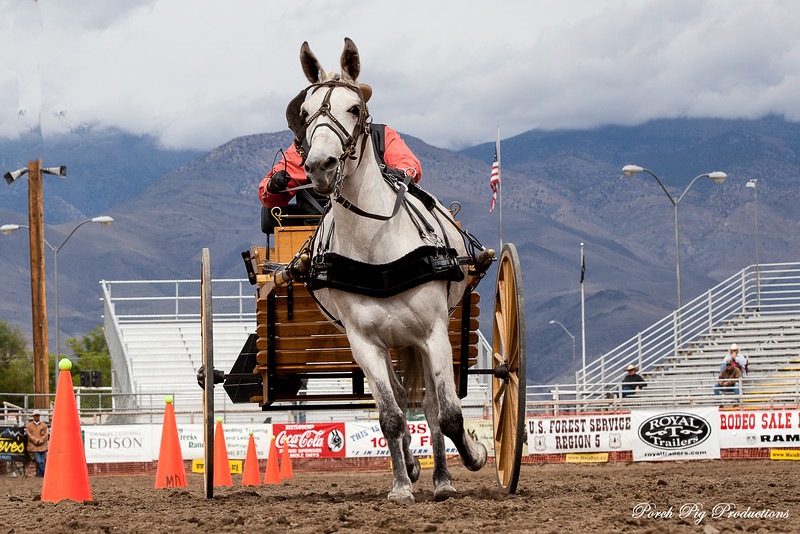 _MG_5563Mules_and_more
