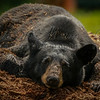 """Broken Heart Bear""<br /> <br /> Nature Photography - Wildlife Photography - Stock Photography"