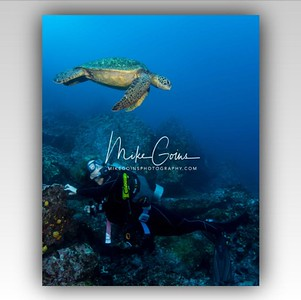 Diver with Turtle Overhead (2)
