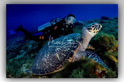 Diver with Turtle (2)