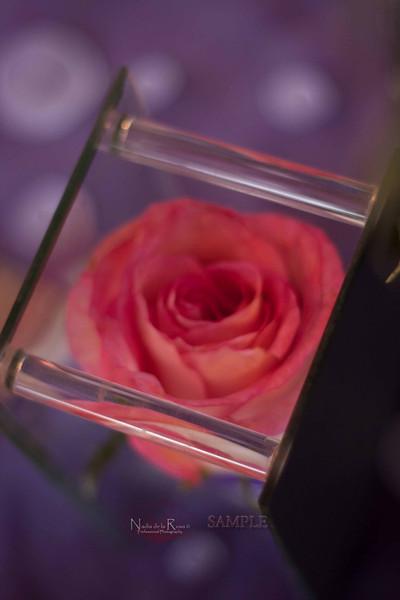 IMG_1793 July 22, 2012Melissa y Edward Wedding Day