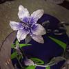 IMG_4083 August 18, 2012 Quinceaños Yanisel dia de la Fiesta