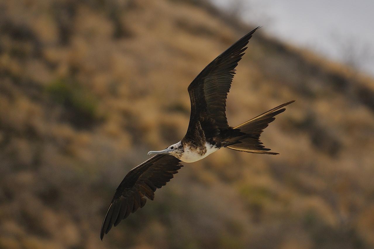 Galapagos Jul 2008 027