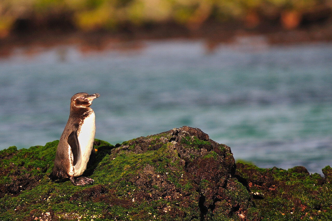 Galapagos Jul 2008 032