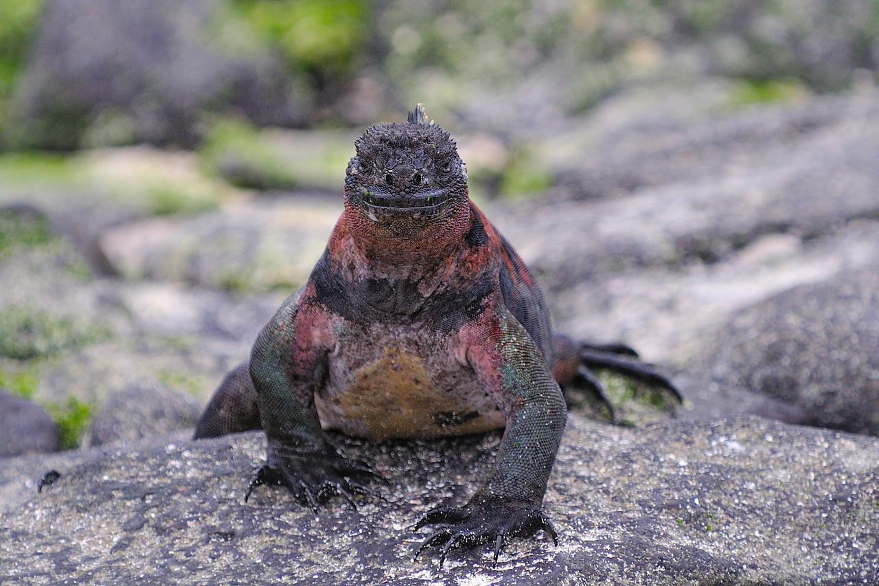 Galapagos Jul 2008 020